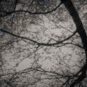 Silhouette of twigs, Ylinen Finland 2004 / Palladium print 2013 ©HATSUMI AND SEIJI MIZUNO