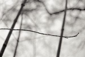 Zen twig, Helsinki Finland / Palladium print ©HATSUMI AND SEIJI MIZUNO
