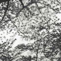 Japan 2009 / Palladium print 2017 ©HATSUMI AND SEIJI MIZUNO