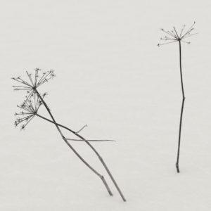 Ylinen Finland 2013 / Palladium print 2017 ©HATSUMI AND SEIJI MIZUNO