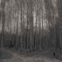 Crossroads in forest, Helsinki Finland / Palladium print ©HATSUMI AND SEIJI MIZUNO