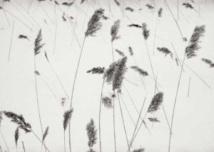 Ylinen Finland 2004 / Palladium print 2014 ©HATSUMI AND SEIJI MIZUNO