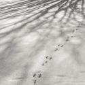 Towards Silence, Ylinen Finland / Palladium print ©HATSUMI AND SEIJI MIZUNO