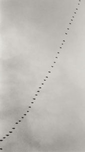 Up from the spring sky, Tenhola Finland 2005 / Palladium print 2011 ©HATSUMI AND SEIJI MIZUNO